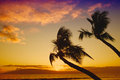 Palm trees silhouetted in a dramatic tropical sunset Royalty Free Stock Images