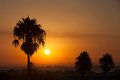 Palm trees silhouettes at sunset in Spain Royalty Free Stock Images