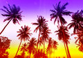 Palm trees silhouettes on tropical beach at sunset Royalty Free Stock Photo