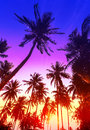 Palm trees silhouettes on tropical beach at sunset. Royalty Free Stock Photo