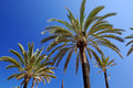 Palm trees and sky. Royalty Free Stock Photography