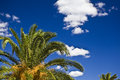 Palm trees in the sky during a sunnay day on french riviera Stock Photography