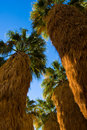 Palm trees stand Royalty Free Stock Photography