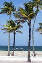 Palm trees and sunbathers on the beach sun worshippers of fort lauderdale Stock Photos