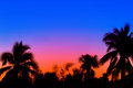 Palm trees at sunrises Royalty Free Stock Photo