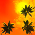 Palm trees a on sunset background silhouettes of the artistic Stock Images