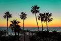 Palm trees at sunset. Royalty Free Stock Photo