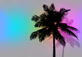 Palm trees sunset retro tropical coconut tree silhouettes illustration in format Stock Photo