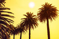 Palm trees at sunset sky background. applied toning Royalty Free Stock Photo