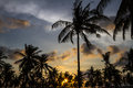 Palm trees at sunset time on the background of a beautiful Royalty Free Stock Photo
