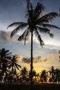 Palm trees at sunset time on the background of a beautiful Stock Image