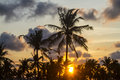 Palm trees at sunset time on the background of a beautiful Royalty Free Stock Image