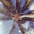 Palm trees swaying mexico shot by the beach of a tree Royalty Free Stock Photos