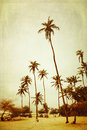 Palm trees tall on a beach cross processed to look like an aged instant picture with texture Royalty Free Stock Photo