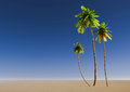 Palm trees on a tropical beach Royalty Free Stock Photos