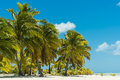 Palm trees on tropical beach with Royalty Free Stock Photo