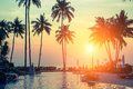 Palm trees on tropical beach during amazing sunset. Nature. Royalty Free Stock Photo