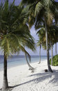 Palm trees at a tropical beach, Maldives Stock Photos