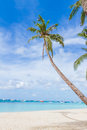 Palm trees on tropical beach and sea background summer vacation Arkivbilder