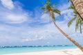 Palm trees on tropical beach and sea background summer vacation Royaltyfri Bild
