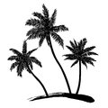 Palm trees tropical black silhouettes on white background vector Royalty Free Stock Photos