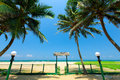Palm trees at the tropical coast in sri lanka Stock Photo