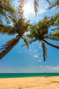 Palm trees at the tropical coast in sri lanka Royalty Free Stock Image