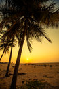 Palm trees at the tropical coast in sri lanka Royalty Free Stock Photography