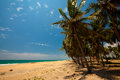 Palm trees at the tropical coast in sri lanka Stock Photography