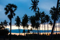 Palm trees at the tropical coast in sri lanka asia Royalty Free Stock Photography