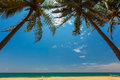 Palm trees at the tropical coast in sri lanka asia Royalty Free Stock Photo