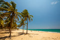 Palm trees at the tropical coast in sri lanka asia Royalty Free Stock Image
