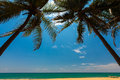Palm trees at the tropical coast in sri lanka beautiful beach Royalty Free Stock Image