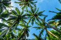 Palm trees in tropical forest Royalty Free Stock Photo