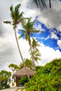 Palm trees on the tropical island landscape in a sunny day Royalty Free Stock Photography