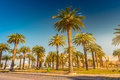 Palm trees in a tropical resort at beautiful sunny day. Image of tropical vacation and sunny happiness. Royalty Free Stock Photo