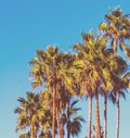 Palm trees under a blue sky in vintage tone Royalty Free Stock Photo