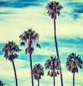 Palm trees under clouds in California in vintage tone Royalty Free Stock Photo