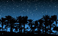 Palm Trees Under Stars Stock Image