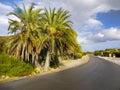 Palms trees street