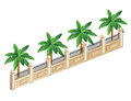 Palm trees vector isometric fence with Stock Images