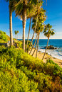Palm trees and view of the pacific ocean at heisler park in laguna beach california Stock Photos