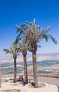 Palm trees view to jordan valley ruins crusader fortress belvoir lower galilee israel Royalty Free Stock Image