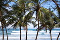 Palm Trees And Waves