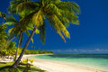 Palm trees and a white sandy beach at fiji islands Royalty Free Stock Photo