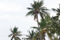 Palm trees in the wind on a tropical coastline in Thailand.  Cop Royalty Free Stock Photo