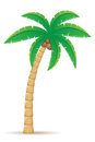 Palm tropical tree vector illustration on white background Stock Images