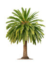 Palm on white background Royalty Free Stock Photos