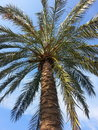 Palm zoom wiew for Stock Image