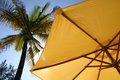 Palma parasola żółty Zdjęcia Stock